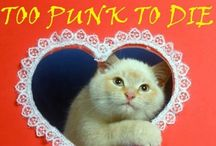P.R.K.C / Punk Rock Kitty Cats / by The Nearly Deads