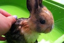 kanin / Flopsy, Mopsy, and Cottontail // little bunny foo foo / by Dulce