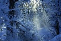 Winter wonderland / by Dragica Juzbasic