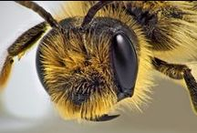 queen BEE / Welcome, glad you stopped by.  I hope you enjoy my boards, I`ve spent a lot of time on them.  Please feel free to repin, but please be courteous.  If this request is not respected, you will be blocked.  Thank you for understanding. / by Gitte