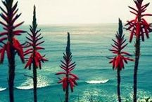 Seascapes / by Stukley Grace