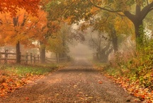 Fall/autumn / by Digital Photography School