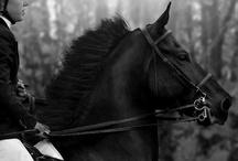 :: Equestrian :: / by Asako Endo