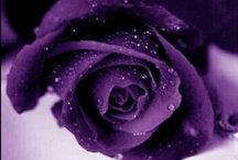 "The Colour Purple / My favourite colour... I don't quite know how to explain it, but when I am surrounded by purple I feel, somehow... deeply connected with who I am. I feel more ""me""  in some way, like I've relaxed & settled into my true soul...  / by Meredith's Pins"