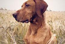 Dogs / by Melissa Kelley