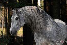 For the love of horses / by Marianne Bennett