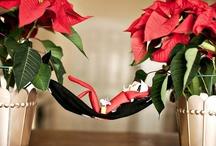 Elf on a Shelf / by Holidays