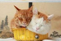 Kitties / Too much fluffy! / by Cassandra
