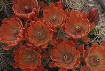 AZ Gardening / by Lynne Hobson