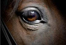 Hearts-Horses / Heaven, Wisdom and all the other horses / by Bitzsoi Novels
