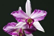 Orchid / by Lusy Wahyudi