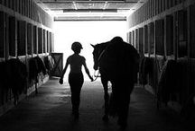 For the Love of Horses / by Karlie Harper
