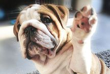 Bulldogs & Boxers...not dogs,but MY children! / by Tonya Sheeks