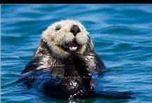 Otters...Cousin to the Ferret... / by Donna Griffiths