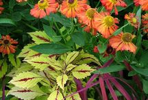 Garden inspirations / by Cindy