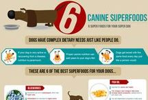 Dog Articles / Articles on the Web about dogs. Dog health. Vet advice. Training tricks. Animal behavior Dogs Puppies Puppy / by Dog Breeds