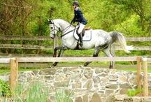 Horses! / Horse humor, riding/training tips, stuff I can relate to or like (basically, anything to do with horses) / by Haley Gill