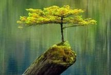 Tremendous Trees / by Liz Kay