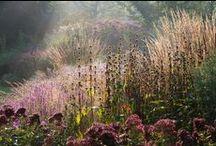 Gardening & Flowers / by paula schifano