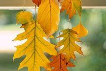 Autumn - Halloween deco / by Éva Portik