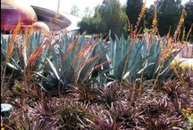 Cacti and Succulents / Stuck for an idea of how to showcase your drought-tolerant plants? Take a stab at growing these plants.  / by Teresa Watkins