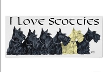 I Collect Scotties / We have two Scotties now, Nipper and Mactavish. I have over 200 Scotties in my collection from porcelain, china, chalk statues, to tea cups, whiskey jugs, wooden business card holders, commercial advertising, vintage postcards, all dating between 1920's - 21st century.  I love my Scotties.  We also rescue Scotties. If you are owner of any of these vintage photographs, please let me know.  / by Teresa Watkins