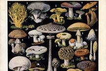 Fun Guys / Magical mushrooms, fungi, and mychorrizal spores.  Dig in!  / by Teresa Watkins