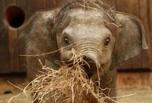 Animals so cute to love / by Johanna Roach