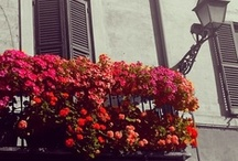 Balcony  / by Jennifer Grey