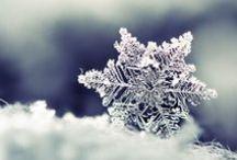 Winter Wonders / by Mau sabot