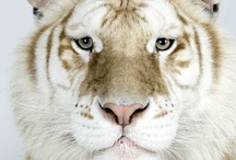 Animals / by Kimberly Davis