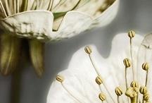 flowers / by kiti katti