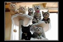Just cats :-D / by Linda Reuter