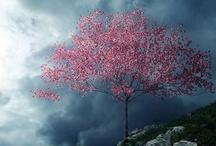 Breathtaking Sights & Views / by Maria Seifrid Rodriguez