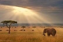 Africa / by Einat Zobel
