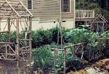 Trulli Mimosa  garden Ideas  / I am designing a new kitchen garden / by liz clery
