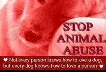 """Animal ABUSE/NEGLECT has to """"STOP""""!!! / WE ARE THEIR VOICES......PLEASE GET INVOLVED!!! / by Shawn Gussoni"""