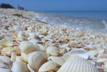 Salt Air, Sand and Shells / by Jennifer Bokmeyer