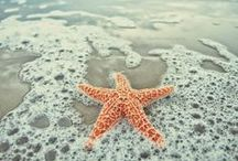 Ocean / Sea Life, Ocean, Coral, Seashells / by Wabisabi Green