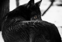 Wildlife / by Rachel Varga