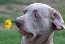 Doggies!!! / by Dorothy Franks