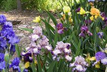 Gardening / by Judy Watrous