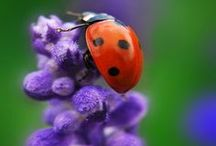 Lady Bug, Lady Bug / by Mary Jane Gearhart