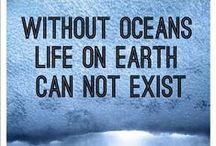 Oceans. / by Sana Tawileh