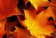 Beautiful Colours Of Autumn / Celebrating the wonderful array of autumnal colours and crops ready to harvest / by The RHS