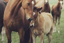 animals: horses / horses! horses! horses! who couldn't love them! / by Rachel Winter