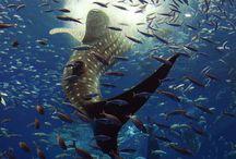 UNDERWATER LIFE / Underwater Creatures / by sharon branch