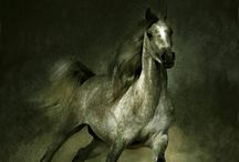 Essence of Epona / Divinely beautiful horses / by Emily