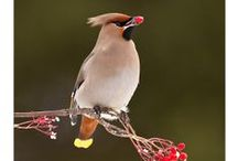 Birds ☆ Photography / by Ririko Dee