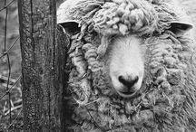 Back on the Farm / by Kimberly Ann